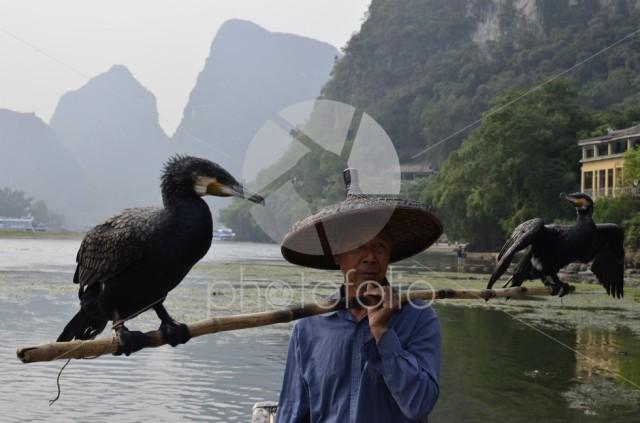 Fishing with cormorant