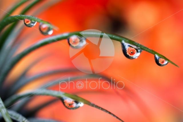 Dew Drops Refraction