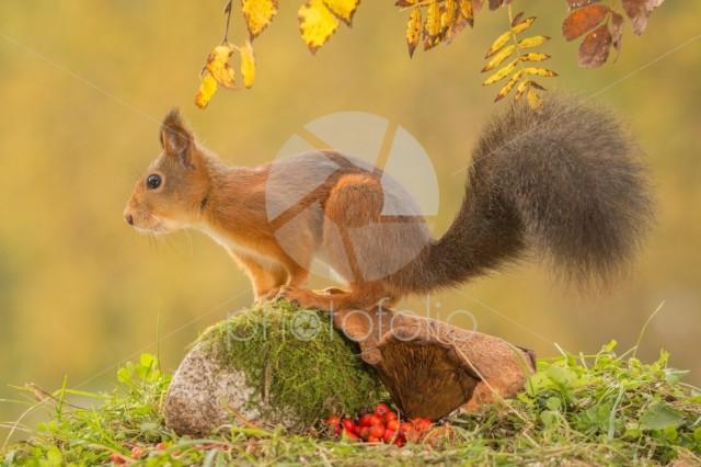Tail of autumn