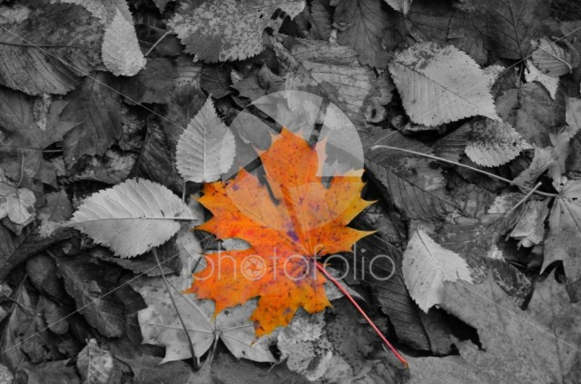Autumn – The chosen (leaf) one
