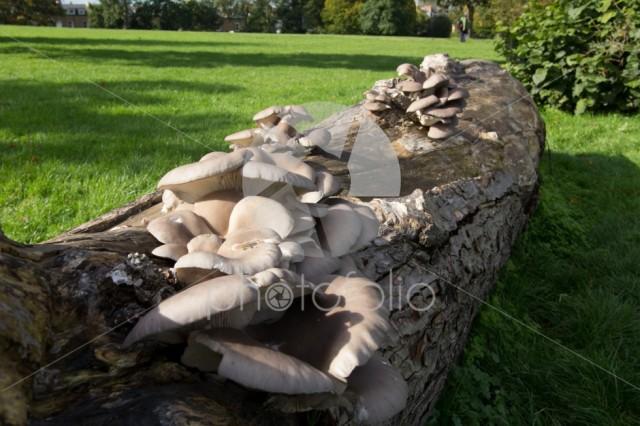 Wild fungus on a tree trunk