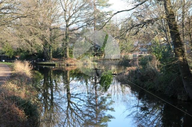 Canal at Springtime