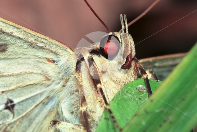 Macro photograph of a moth at night in Belize.
