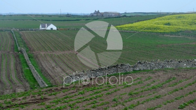 Farming landscape. Ploughed fields with planted crops. Wales.