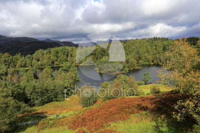 Autumn view over Tarn Hows, Lake District National Park