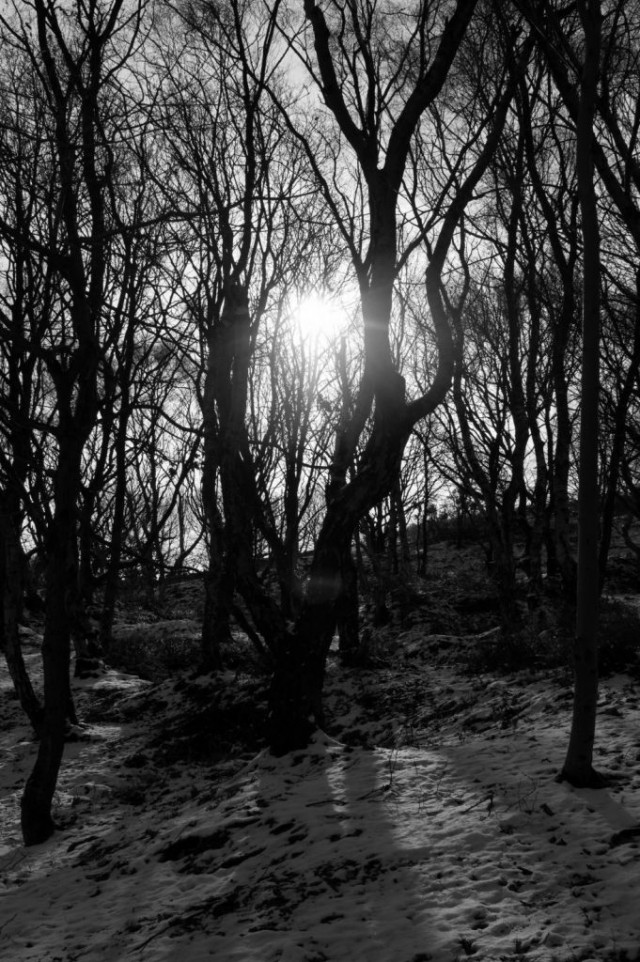 Tree in sunshine Marple quarry