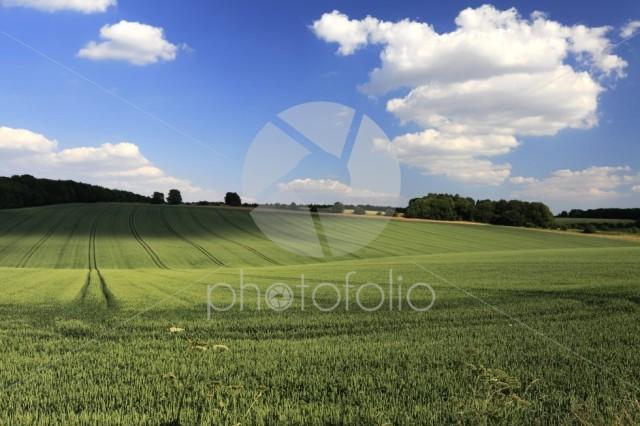Summer landscape fields near Winchcombe town, Gloucestershire