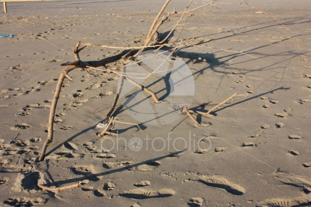 Branch of a beached dry tree