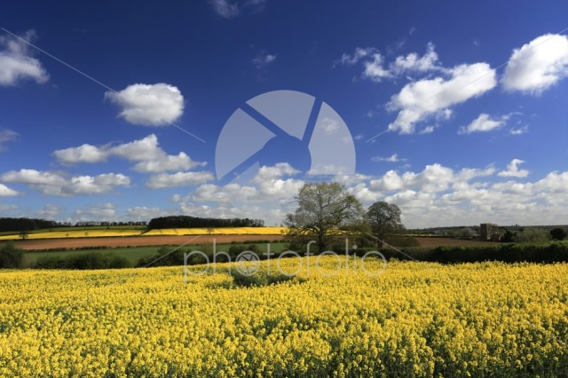 Summer view over Oil seed rape fields to Tixover village