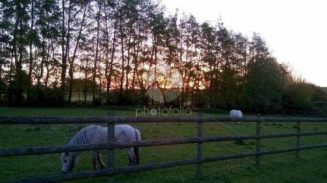Grazing ponies at sunrise