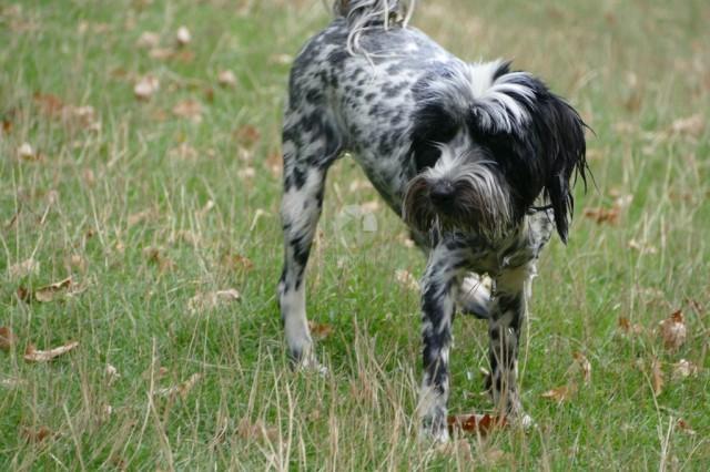 Dog in high grass