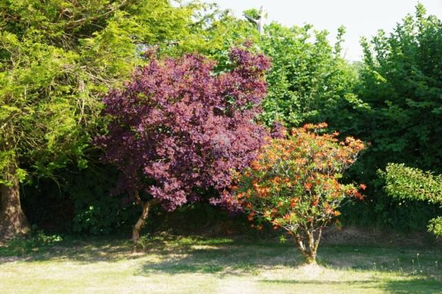 Fruit Trees in Garden
