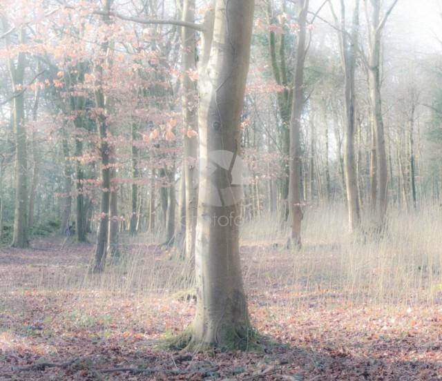 Woodland image in Silverdal Lancashire England