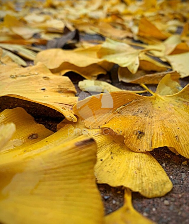 Crisp Autumn leaves scattered across the pavement