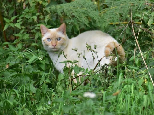 Farm cat