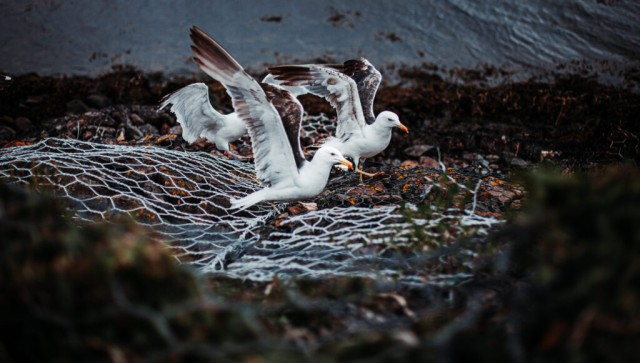 Seagull Party