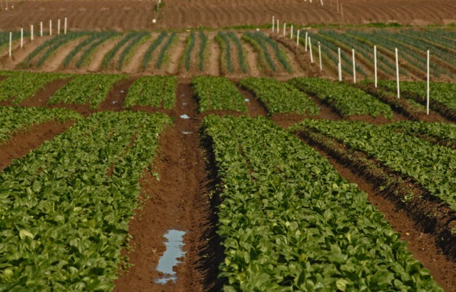 Rows of crops in paddocks Australia