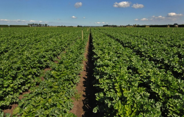 Food crops ready for harvesting Australia