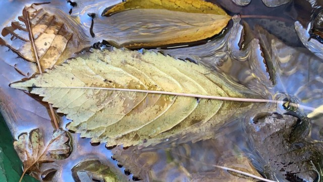A leaf floating in oily water