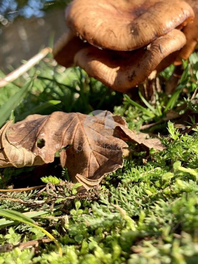 Crispy brown leaf