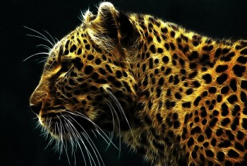 digital_leopard-wide
