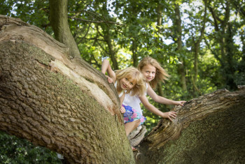 Two girls climbing a tree in a forest.