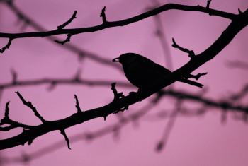 Silhouette of bird sitting on tree branch