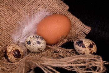 Quail eggs and chicken on sacking. Close-up.