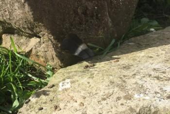 caught between a rock
