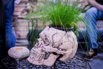 Flower pot as a a human skull. Side view. Decorative pot. Interior vase. Creative pot.