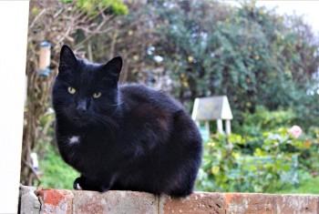 Black Cat On Guard