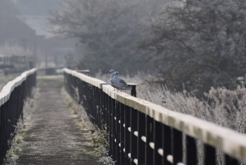 Birds on a bridge