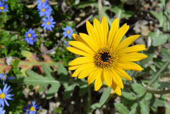 botanic gdns may  2017 67