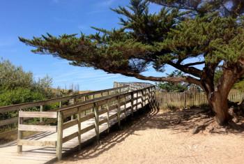 Trees at Il de Re