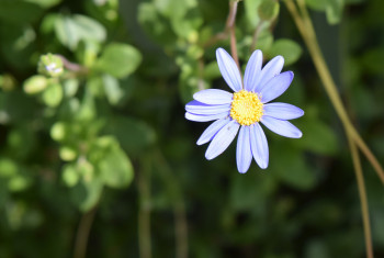 botanic gdns may  2017 49