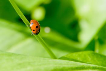 LadybirdOnGreen