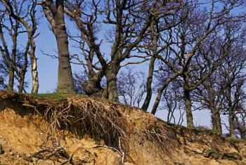 Erosion on Mersey Island, Essex