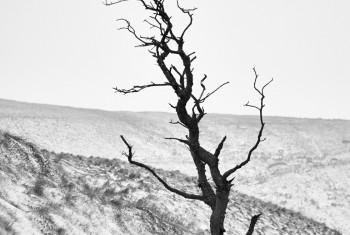 DSC_4791Blwch mid solo tree BW march18
