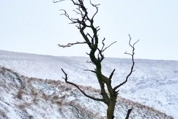 DSC_4791Blwch mid solo tree march18