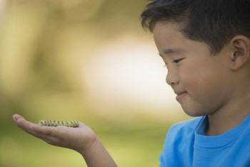 A boy holding a gecko or lizard on his hand.