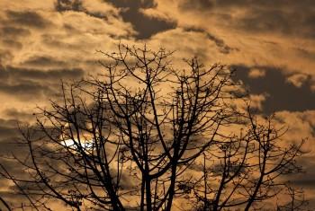 Sun, shade, trees in sunshine