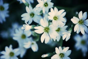 9. White flowers – Copy
