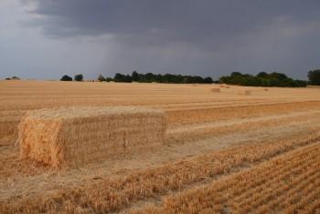 Stormy Harvest Pt 2